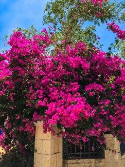 A (beautiful) day in Bet Shemesh.